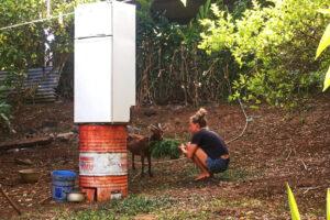 Káťa krmí kozu za udírnou